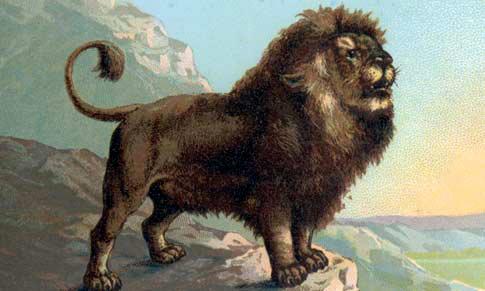 5AS_lion.jpg