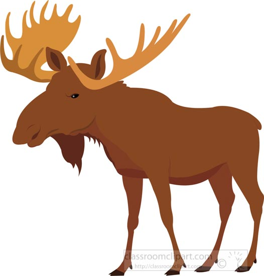 moose-on-white-background-clipart-image.jpg