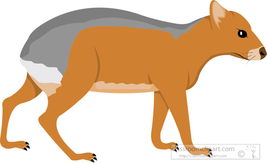 patagonian-cavy-clipart-617.jpg