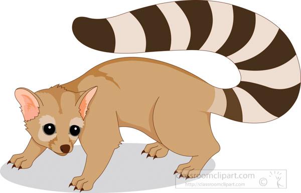 ringtail-animal-cat.jpg