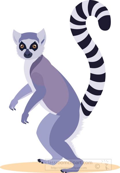 ringtail-animal-lemur.jpg
