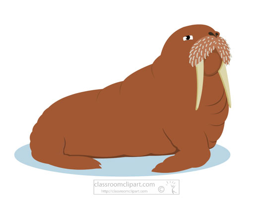 clipart-of-walrus-with-tusk-whiskers-718.jpg