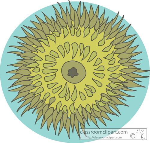 sea_anemones_728.jpg