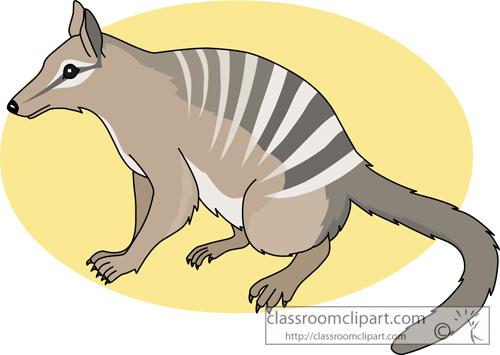 marsupial_numbat_713.jpg