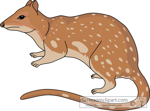 marsupial_spotted-tailed_native_cat_713.jpg