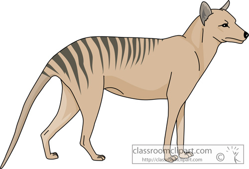 marsupial_tasmanian_wolf_713.jpg