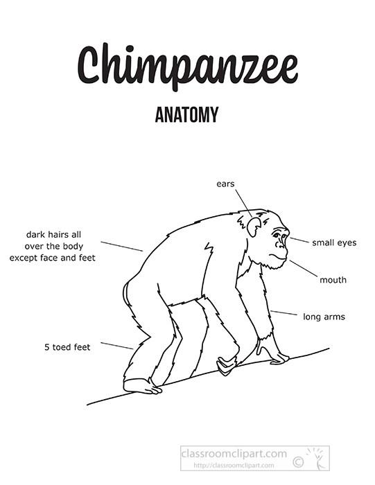 chimpanzee-external-anatomy-black-outline-printout-clipart.jpg
