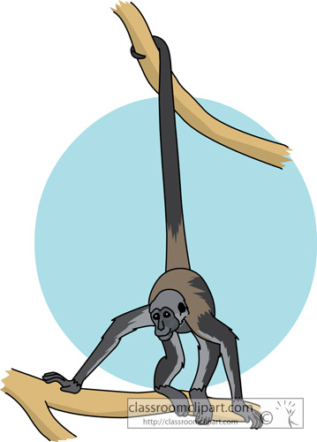 monkey_spider_713.jpg