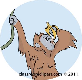 orangutan-04A-color.jpg