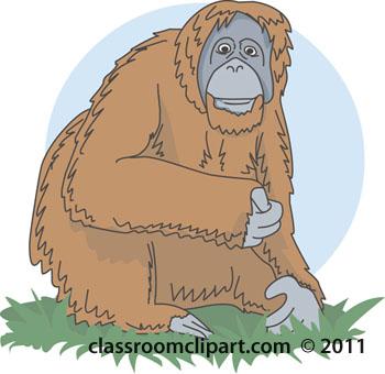 orangutan-color-03A.jpg
