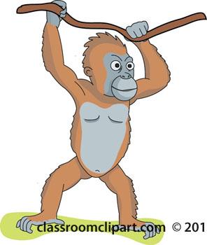 orangutan-color-112-01A.jpg