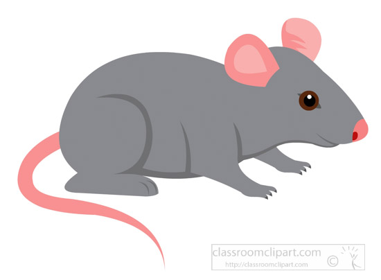 gray-mouse-pink-ears-clipart-725.jpg