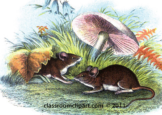 two-wood-mice-under-mushroom.jpg