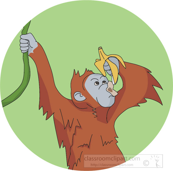 orangutan-hanging-from-tree-eating-banana-clipart-image.jpg