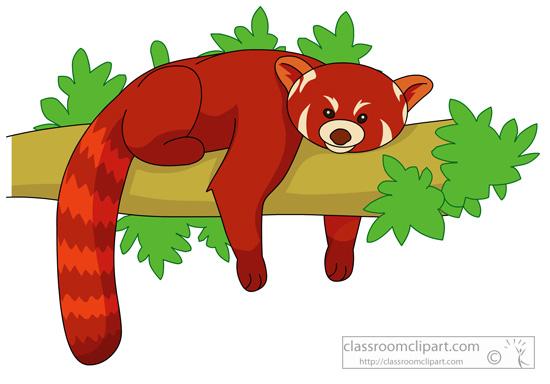 red_panda_03_118.jpg
