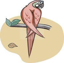 parrot_49.jpg