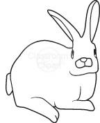 rabbit_222B.jpg