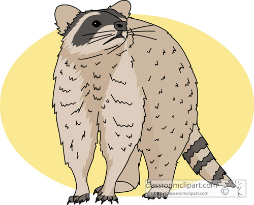 raccoon_713.jpg