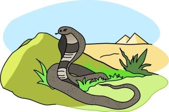 cobra_snake_709A.jpg