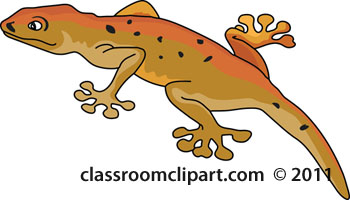 lobe-footed-gecko-clipart.jpg