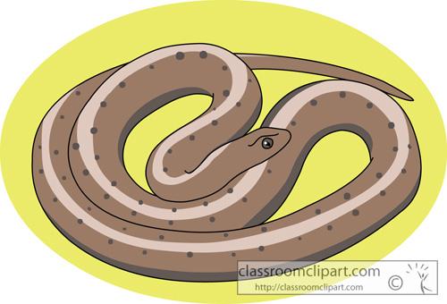 northern_brown_snake.jpg