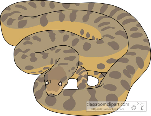 reptiles_anaconda_713.jpg