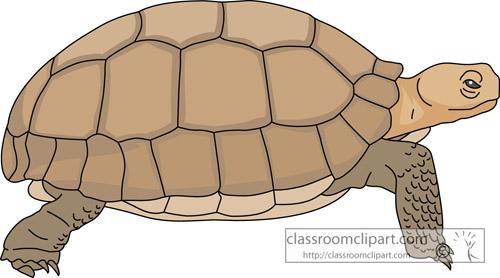 reptiles_desert tortoise_713.jpg