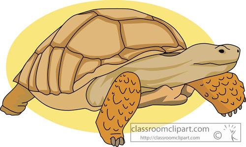 tortoises_african_giant_tortoise.jpg