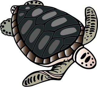 turtle_11b.jpg