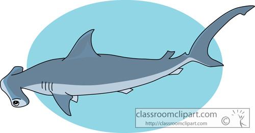 sharks_smooth_hammerhead_shark.jpg