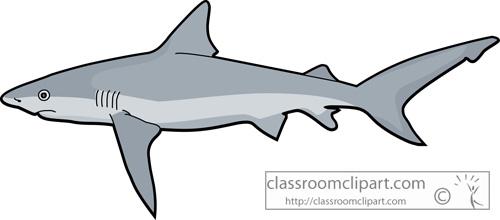 sharks_tiger_shark_728.jpg