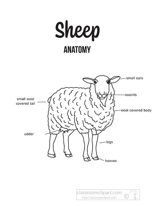 cattle-sheep-external-anatomy-black-outline-printable-clipart.jpg