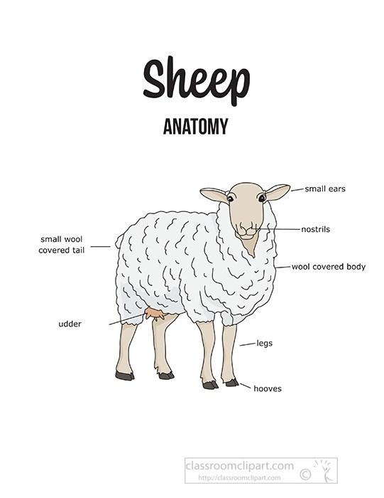 cattle-sheep-external-anatomy-clipart.jpg
