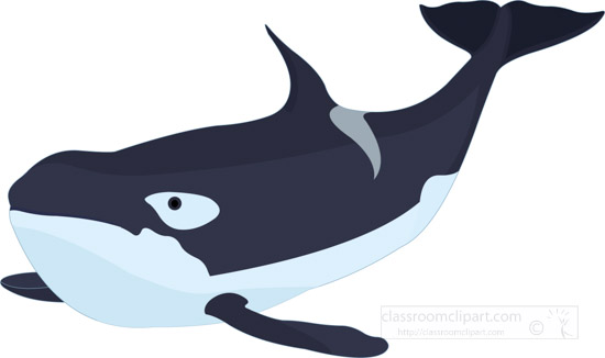 killer-whale-clipart-graphic-image-0309b.jpg