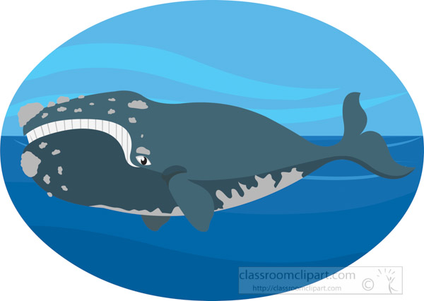 northern-right-whale.jpg
