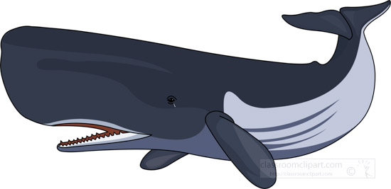 sperm-whale-clipart-graphic-image-0303.jpg