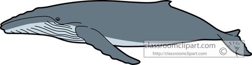 whales_humpback_whale_728.jpg