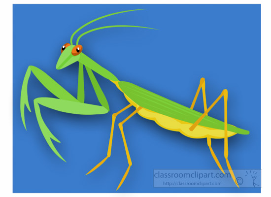praying-mantis-insect-clipart.jpg
