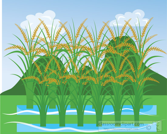 rice-paddy-green-hills-clouds-clipart.jpg