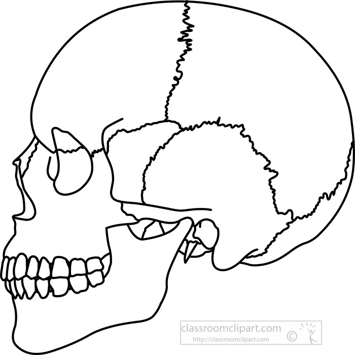 black-outline-human-skull-side-view-anatomy-clipart.jpg