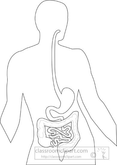 esophagus-stomach-small-instestine-outline-clipart.jpg