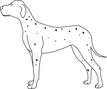 Free Animal Black And White Outline Clipart