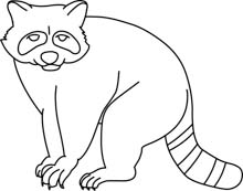Baby Raccoon Hits 938  Raccoon Clipart Black And White