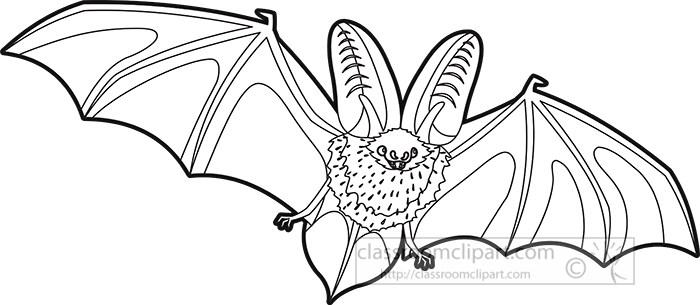 black-outline-virginia-big-eared-bat.jpg