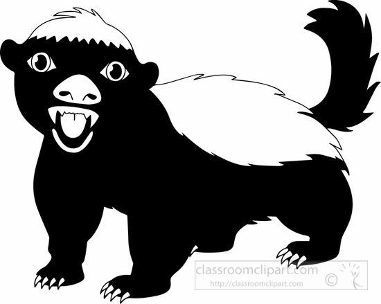 black-white-honey-badger-black-white-1622.jpg