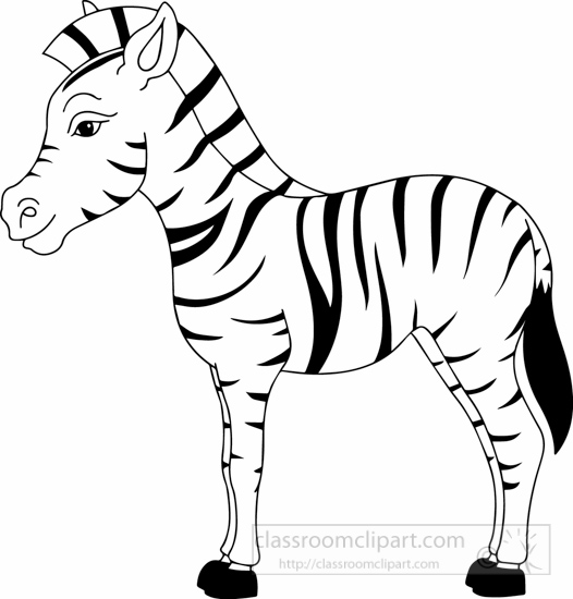 Black white zebra black white 1622 jpg