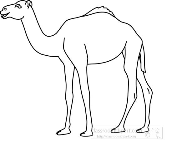 camel_31412_04_outline.jpg