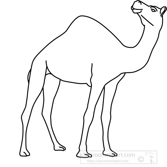 camel_31412_07_outline.jpg