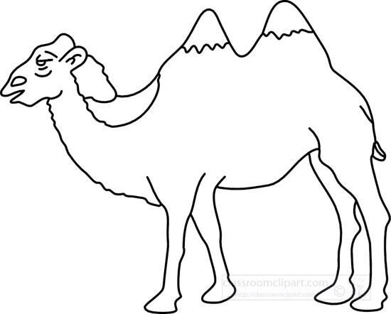 camel_4_11C.jpg