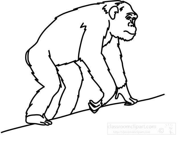 chimpanzee_anatomy_outline.jpg